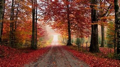 Autumn Road Trees Foliage Fallen Ultrawide Monitor