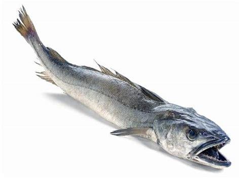 comment cuisiner le merlu merlu colin temps de cuisson recettes conservation