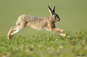 Vitesse Des Animaux : les 10 animaux les plus rapides au monde vegactu ~ Medecine-chirurgie-esthetiques.com Avis de Voitures