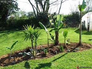 Parterre De Plante : massif exotique jardin les galeries photo de plantes de gardenbreizh ~ Melissatoandfro.com Idées de Décoration