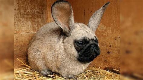 shocking real animal hybrids youtube