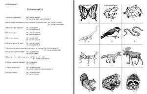 Here's a dichotomous key activity on animals. | Middle ...