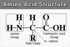 World Of Biochemistry  Blog About Biochemistry   Amino Acids  General Considerations