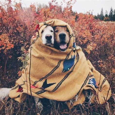 All bundled up #thecheekybean   Cute dogs, Cute animals ...
