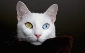 different cats beautiful white cat with different thinking about