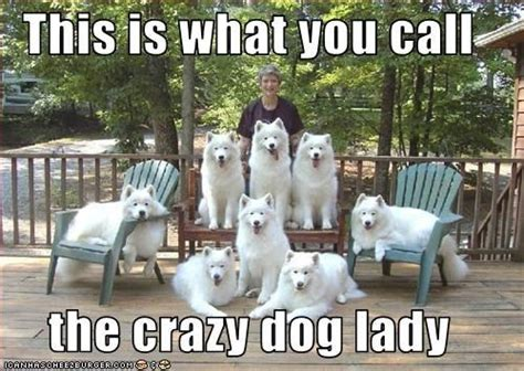 Crazy Dog Lady Meme - pinterest discover and save creative ideas