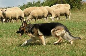 The Sheep, the Wolf, & the Sheepdog – LTC Dave Grossman ...