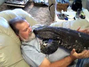 Watching T.V. with my Giant Black Throat Monitor ...