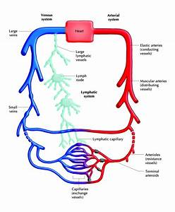 Diagnosis Of Lipedema