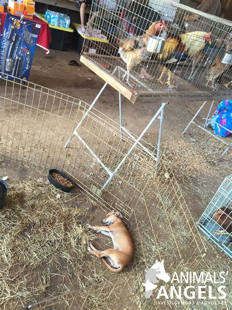 canton trade days dog alley at first monday trade days canton tx july 31 2016 animals angels north america