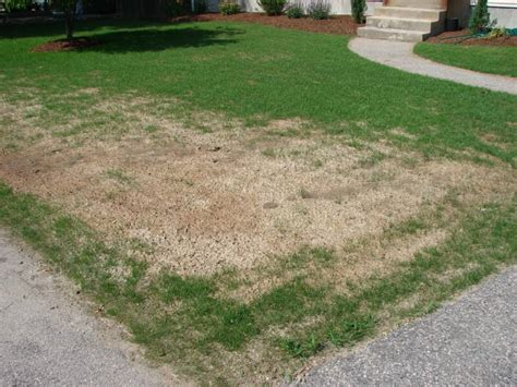 hydro seed grass hydro seed troubleshooting tips from always green in rhode island