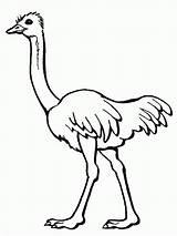 Coloring Ostrich Pages Bird Printable Kindergarten Preschool Animal Preschoolcrafts Sheets Adult sketch template