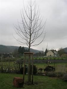 Großen Apfelbaum Kaufen : betreff aw gro en garten anlegen pictures to pin on pinterest ~ Lizthompson.info Haus und Dekorationen