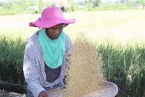 Ilocos Farmers Say Carrageenan Is Effective