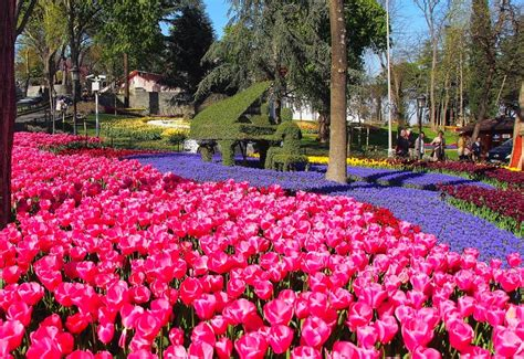istanbul tulip festival in emirgan emirgan park green istanbul