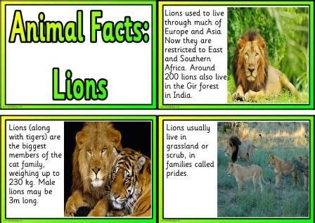 printable animal facts information cards lions
