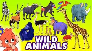 Learn Wild Animals For Kids