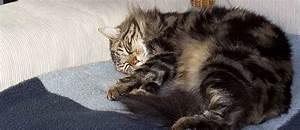 Katzen Fernhalten Von Möbeln : zecken von katzen fernhalten tierisch wohnen ~ Michelbontemps.com Haus und Dekorationen