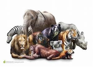 动物系列 - 哺乳动物百科系列 - 素材公社 tooopen.com