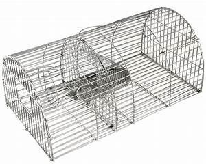 Comment Pieger Une Fouine : pieger un rat ~ Medecine-chirurgie-esthetiques.com Avis de Voitures
