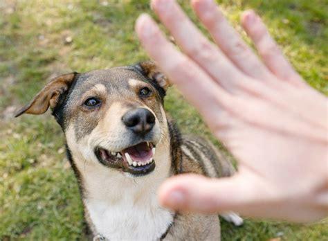 Glueckliche Haustiere Sauberkeit Und Erziehung hundeerziehung nein sagen und grenzen setzen