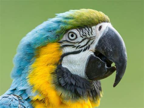 Keeping Parrots As Pets