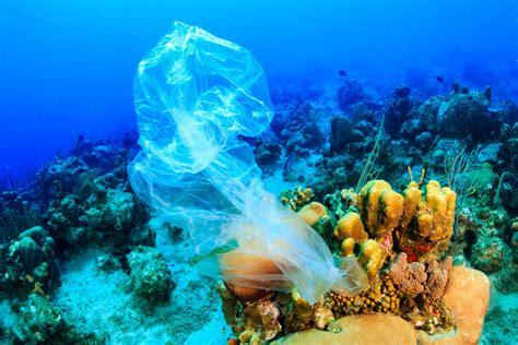 recifes de corais explicados em  imagens geografia visual