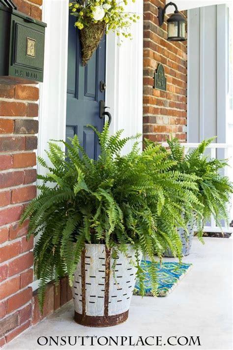 olive bucket planters   porch diy ideas
