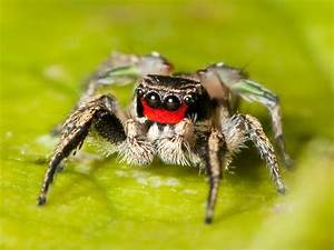 Here's a Contradiction For Ya: Cute Spider