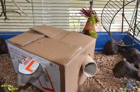 jeux de rat fabriquez une cabane en avec passage secret pour vos rongeurs animogen
