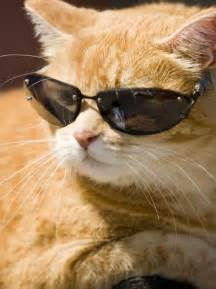 cool cat do you think who are cool are also girlsaskguys