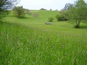 Grassland Simple English Wikipedia The Free Encyclopedia