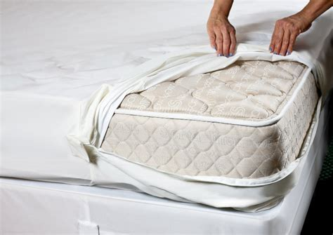 bed bug mattress protectors bed bug management restoring dignity omaha