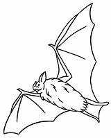 Coloring Bat Pages Bats Printable Facts Fruit Getcoloringpages sketch template