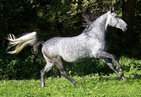 Most Beautiful Horse White Pink Color