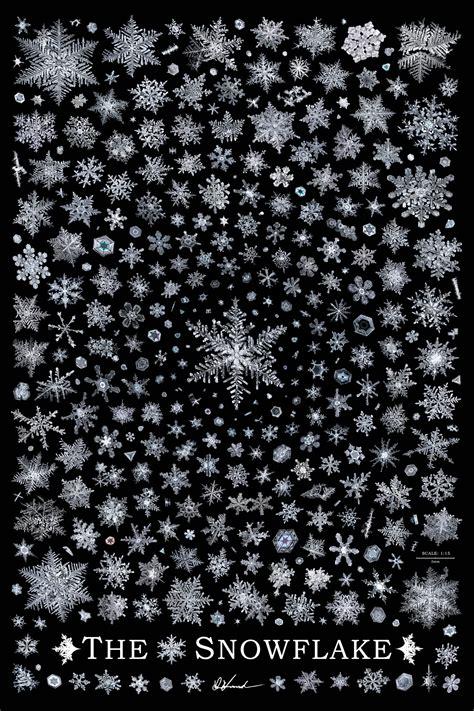 don komarechka photography barrie ontario  snowflake