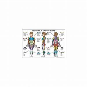 Exericse  U0026 Muscle Guide
