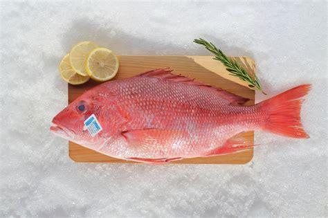 snapper whole vs fish grouper market redfish alaska seafood fishing american