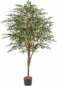 Ficus Benjamini Kaufen : kunstpflanze ficus benjamini naturgetreue kunstpflanze online kaufen otto ~ A.2002-acura-tl-radio.info Haus und Dekorationen