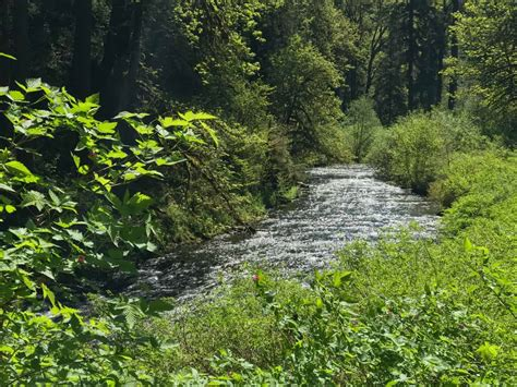 Great Oregon Hikes: Silver Falls State Park | Author Paul ...
