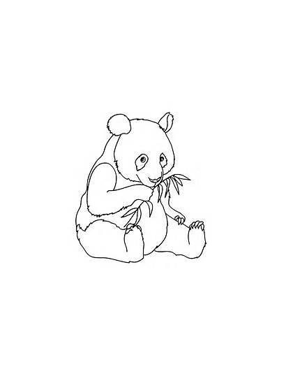 Panda Coloring Pandas Pages Printable Simple Children