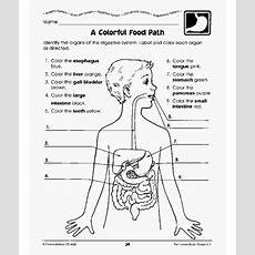 Human Body Worksheets  Diabetes Inc