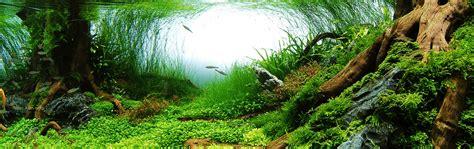 plante d aquarium d eau douce aquarium eau douce plante