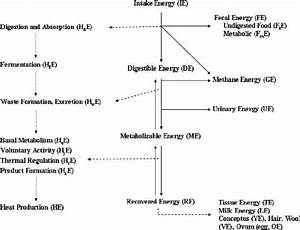 Schematic Partition Of Energy In The Animal  Nrc  1981