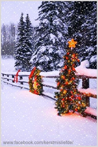 beautiful decorated christmas trees   fence  added