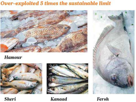 fish uae gulf