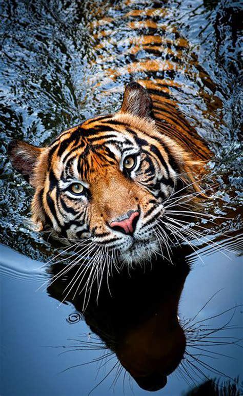 Best 25+ Photos Of Animals Ideas On Pinterest Animals