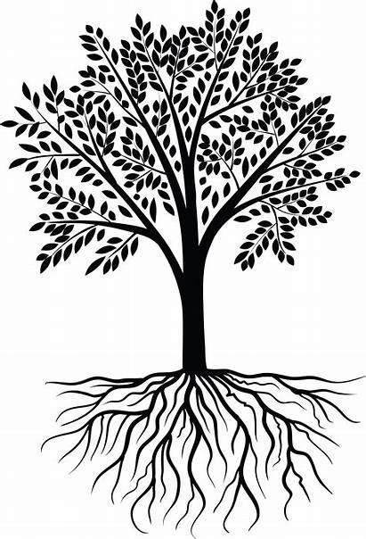 Roots Tree Transparent Clipart Clip Reunion Silhouette