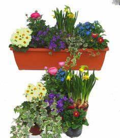 Winterharte Pflanzen Für Balkonkästen : balkonkasten fr hling garten blumen pflanzen ideen tipps pinterest blumenkasten balkon ~ Orissabook.com Haus und Dekorationen