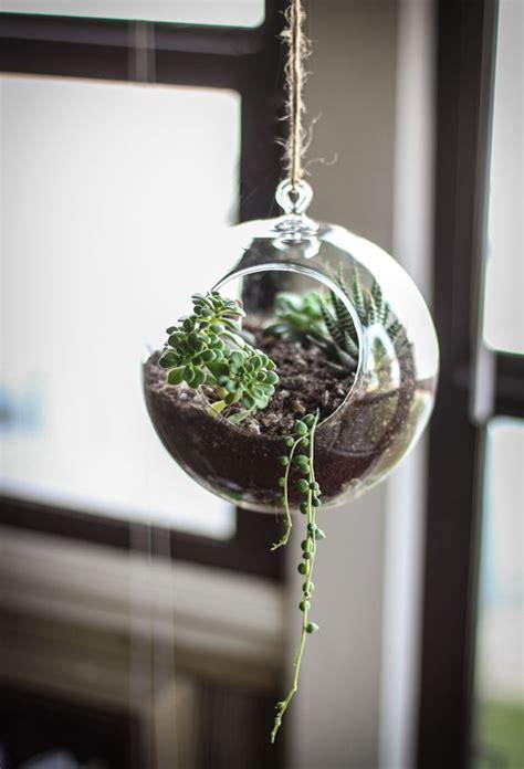 succulent terrarium hanging ideas